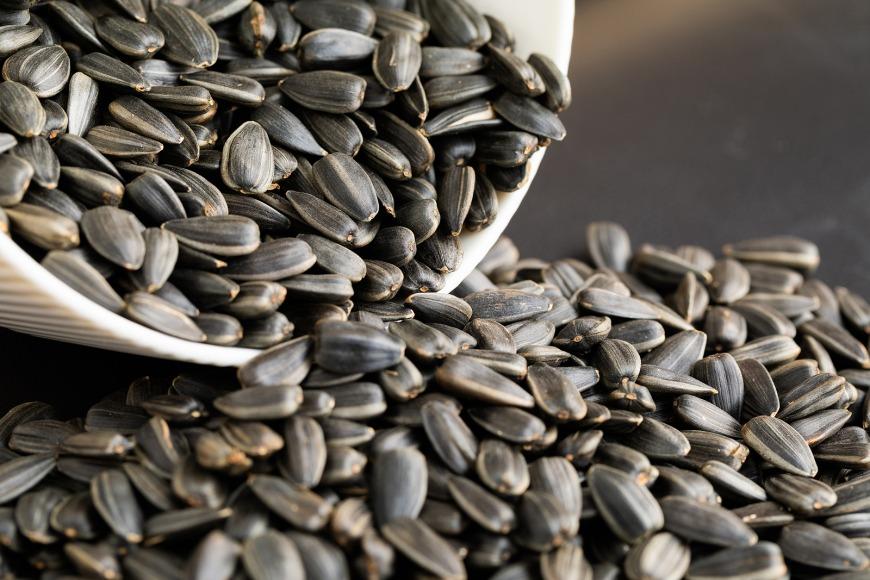 Sunflower Seeds Rich in Protein