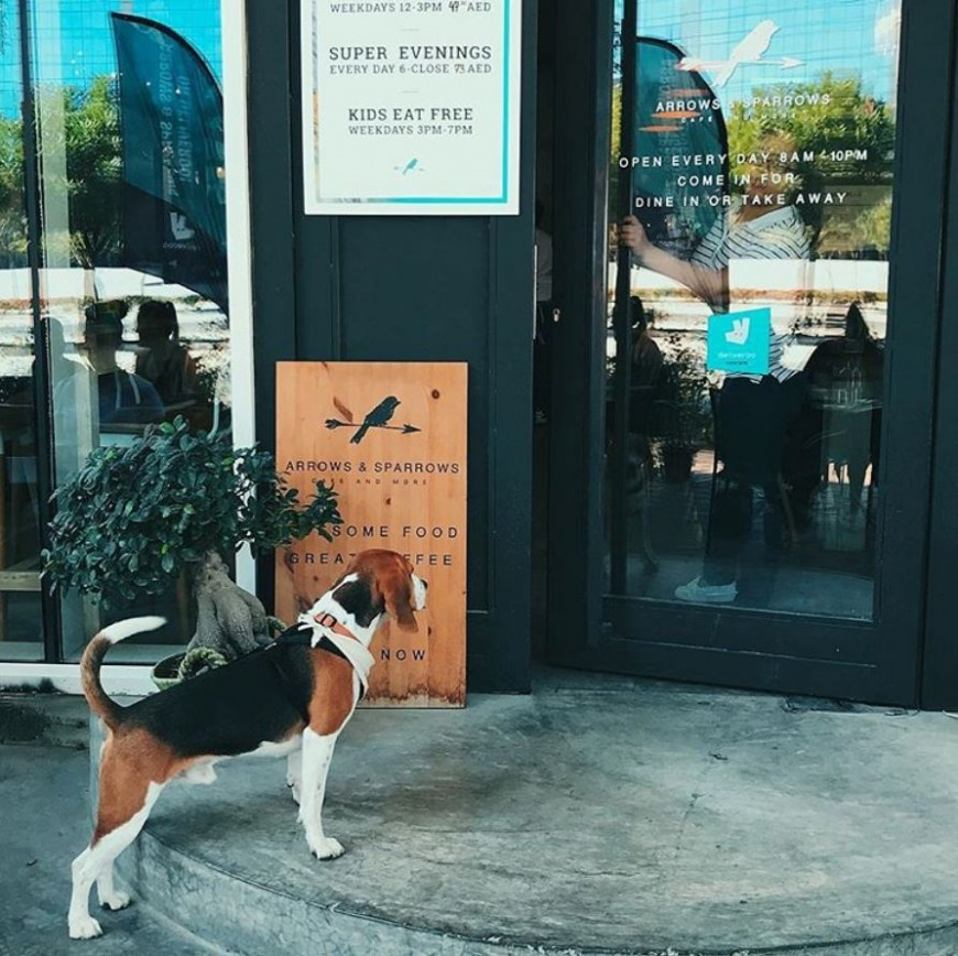 Dog-Friendly Cafes and Restaurants in Dubai