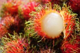 Exotic harmful foods