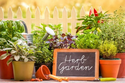 How To Create Your Own Herb Garden To Add Flavour And Fragrance To